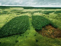 Инвесторов обяжут отчитываться перед экологами